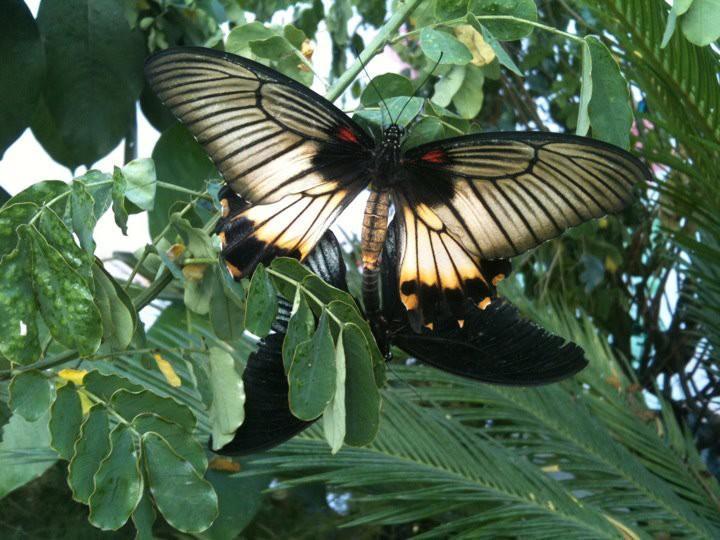 farfalle-4 (1)