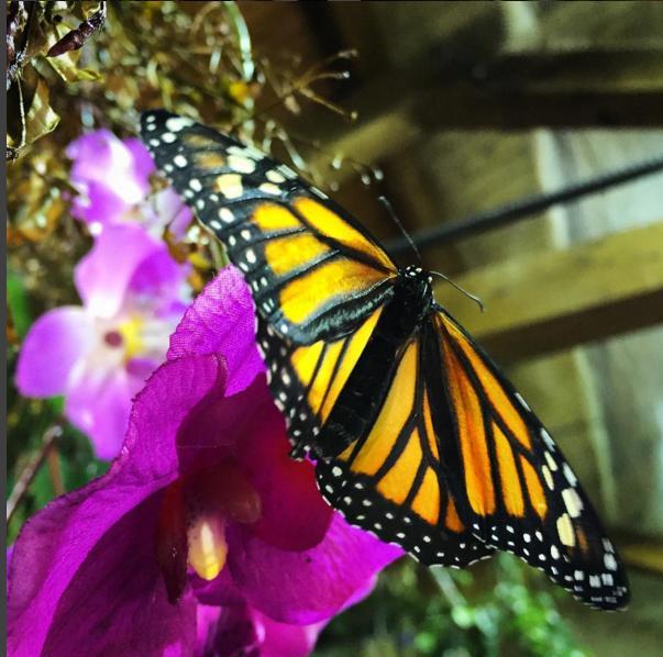 casa farfalle modica